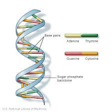 genetic testing fraud